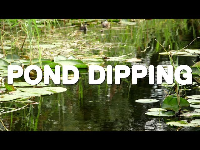 Pond Dipping at Wicken Fen & National Trust conservation