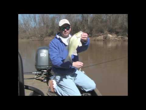 Sabine River White Bass