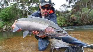 Multiple Trout Caught Fly Fishing [NZ Winter]