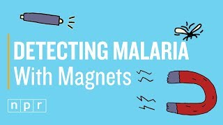 Unmasking Malaria With A Cheap Magnet And A Laser Pointer | Joe's Big Idea | NPR