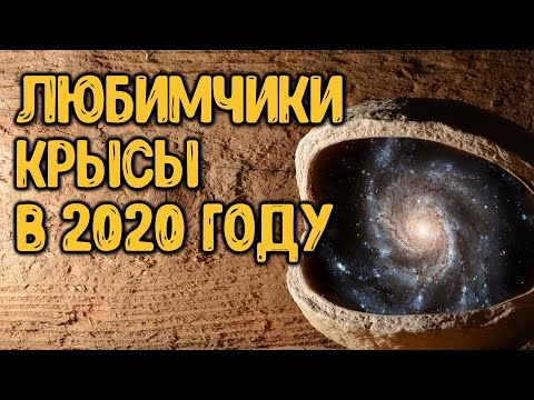 Знаки зодиака, которых в 2020 году ждёт финансовый успех | Астрора