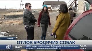 Все больше бездомных животных появляется на улицах Уральска