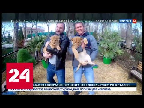Деньги в клетке. Специальный репортаж Ольги Курлаевой - Россия 24