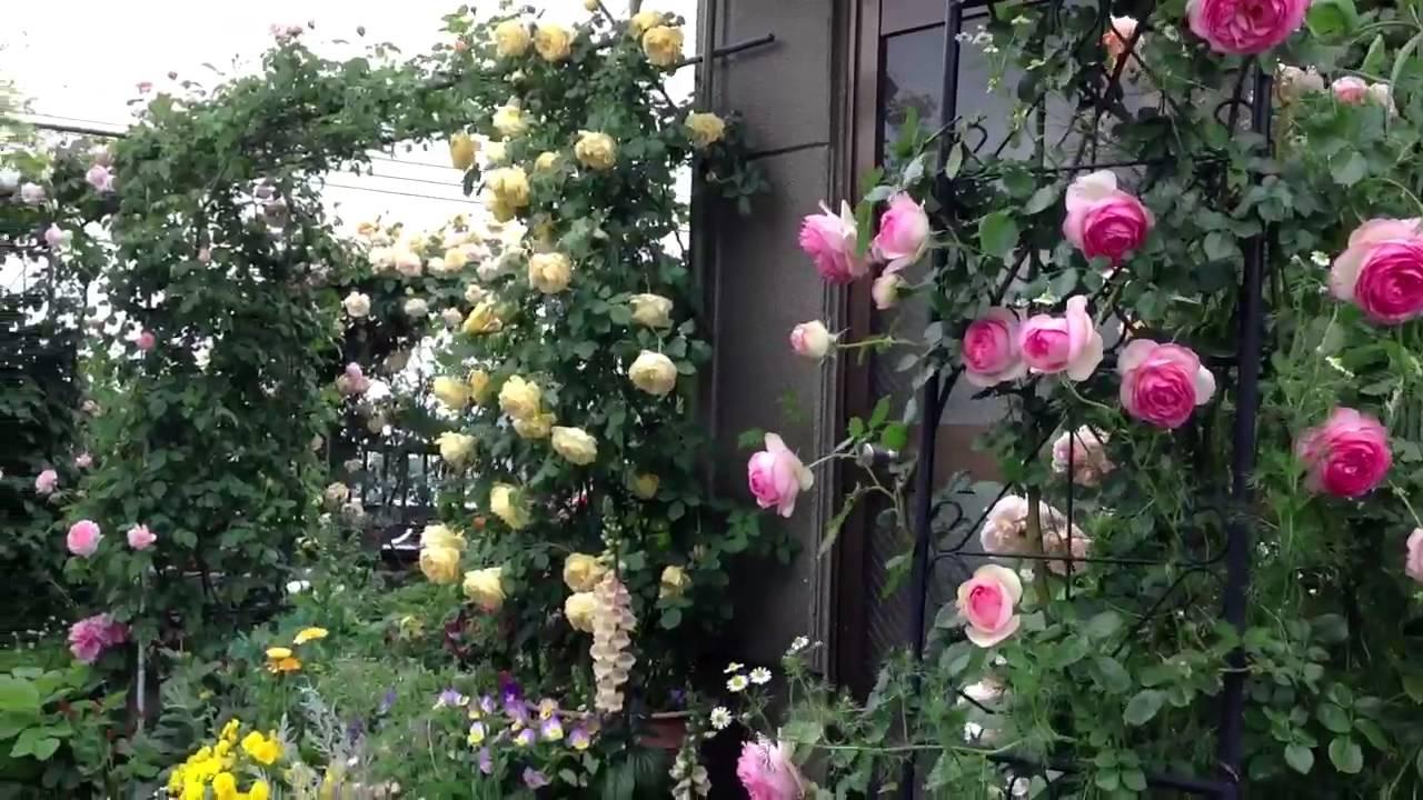 Most beautiful rose gardens in the world - Shiuan S Rose Garden 2013 5 13