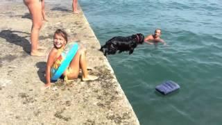 Собака, которая любит плавать на матрасе