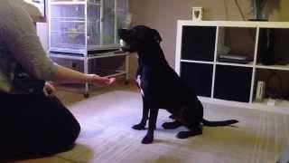 My Trick Dog Ninja Video - February 2015