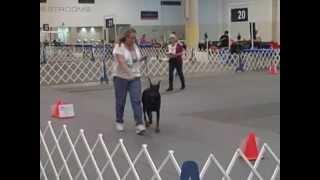 Esmir Von Pressilla, 2014 Houston World Series Dog Show