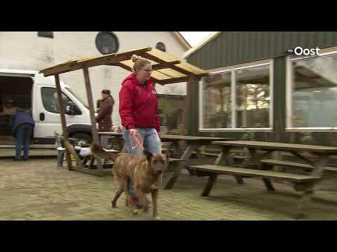 Steeds meer buitenlandse zwerfhonden naar Nederland