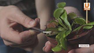 UTV. В Оренбурге прошла выставка хищных растений и экзотических животных