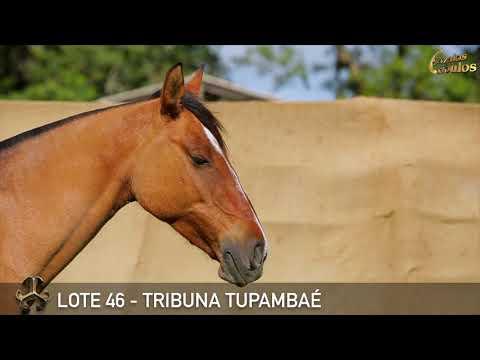 LOTE 46   TRIBUNA TUPAMBAÉ