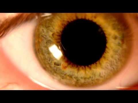 Beautiful Green Iris in Detail- HD Macro Nikon D5100