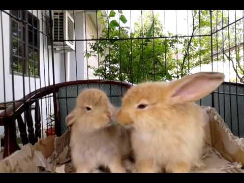teddy bear rabbit youtube