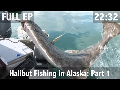 Catching Giant Halibut