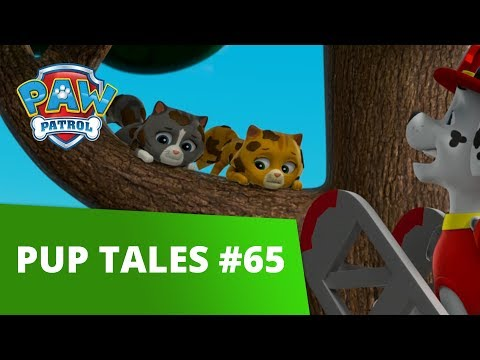 PAW Patrol | Pups Save the Cat Show | Rescue Episode | PAW Patrol Official & Friends!