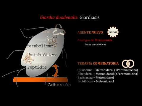 terapia giardia duodenalis