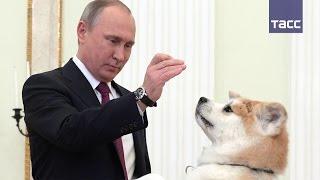 """Путин показал японским журналистам свою """"строгую собаку"""" Юмэ"""