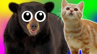 I FIND A CAT!   Bear Simulator #8