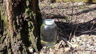 Сбор березового сока | Советы охотника | 2 Способа