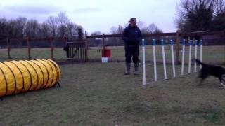 Agility Dog Training - Skye Practising The Weaves