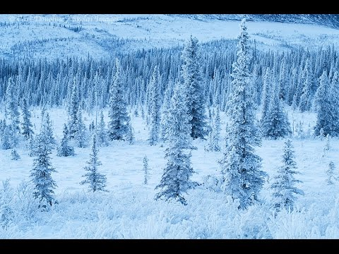 Unexplained Creatures of Alaska :  Documentary on Alaska's Mystery Creatures (Full Documentary)