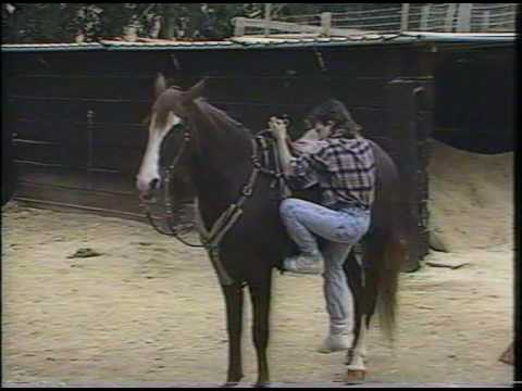 Horsin' Around with David Faustino 1991