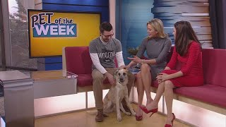 Meet Chase, Our Pet Guest Of The Week