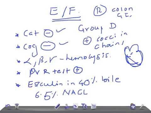 Medical Video Lecture: ENTEROCOCCUS FAECALIS, Microbiology