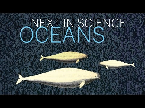 Next in Science | Oceans | Part 1 || Radcliffe Institute