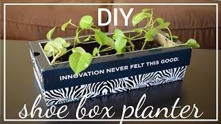 DIY: Cardboard Box gardening home decor  Recycle shoe box   Super cheap & better garden !