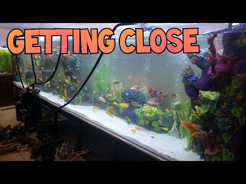 1800 Gallon Monster Tank: Part 5 -Building A Masterpiece (The Tanked Show - Bellagio Tanks)