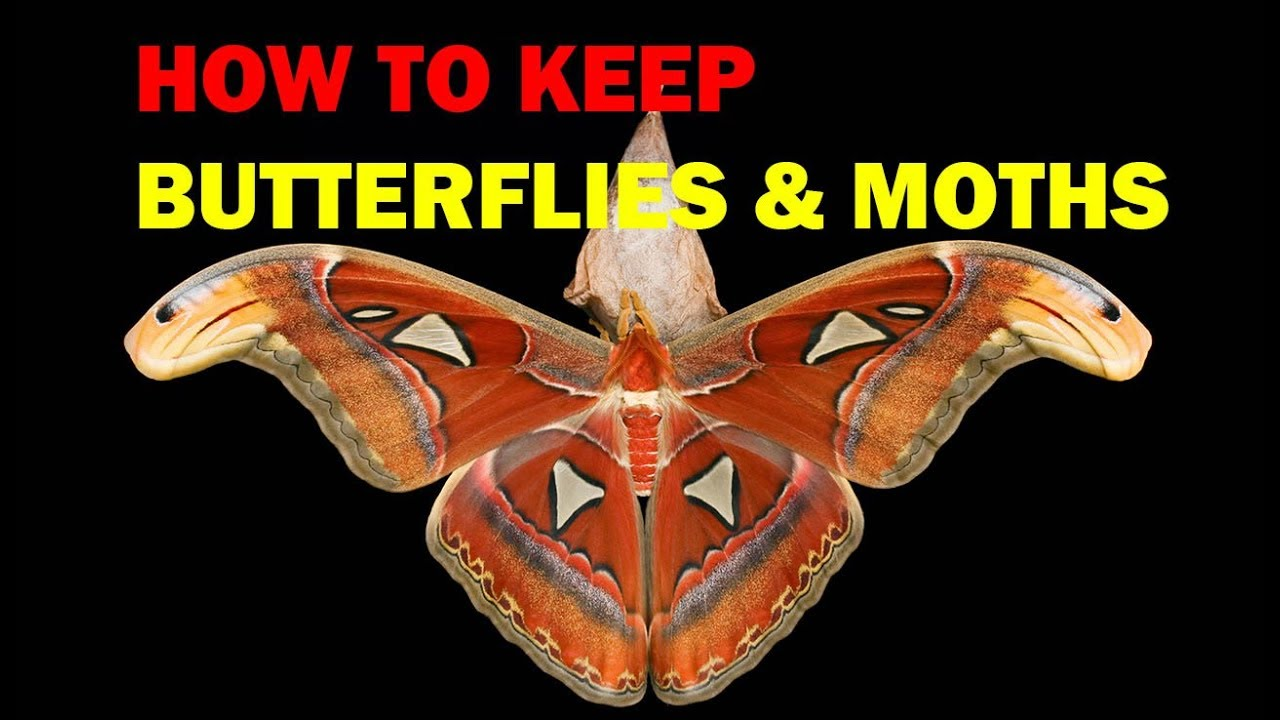 How to store moth 78