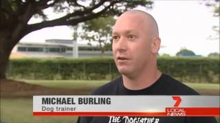 The Dogfather Dog Training Townsville: Buffy's Story, Never Give Up!