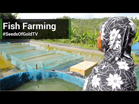 Fish Farming - Seeds Of Gold TV Season 1 Episode 6
