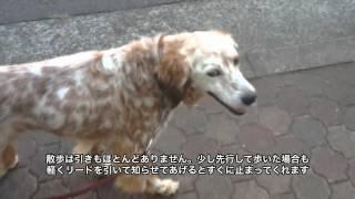 現在里親を募集している保護犬を動画で紹介します。 写真や文章だけでは...