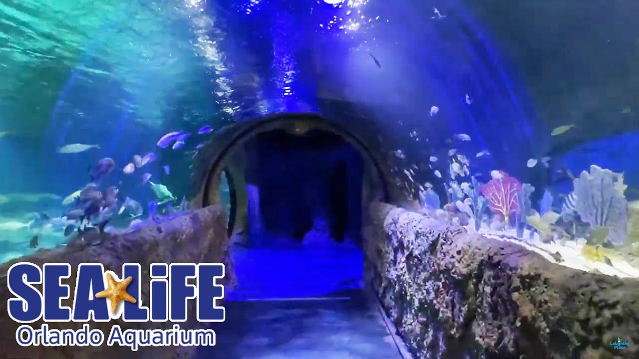 SEA LIFE Orlando Aquarium Full Walkthrough - Reopening Day ...
