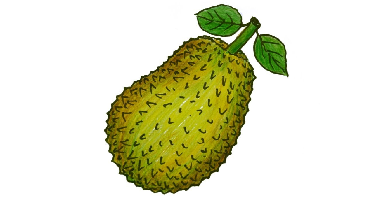 How to Draw Jackfruit Step by Step (Very Easy) - YouTube