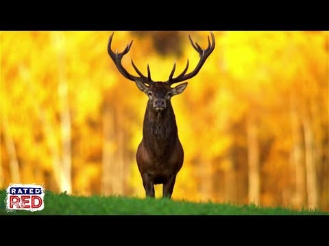 The 5 Best States For Hunting Deer