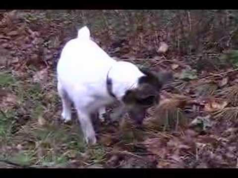 Molly Hunting for Moles