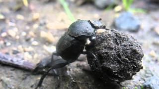 nagy parazita csápokkal