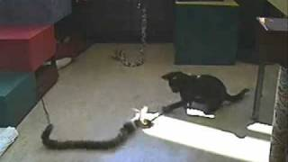 adorable cat playing with the ipet companion