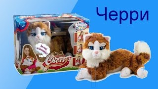 Кошка Черри