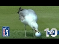 YouTube Turbo Top 10: Animal Encounters on the PGA TOUR