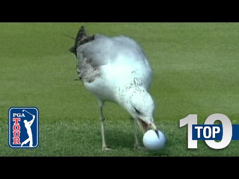 Top 10: Animal Encounters On The PGA TOUR