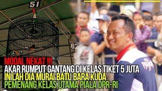 Siapa Juara Murai Batu Tiket 5 Juta di Piala Ketua DPR-RI?