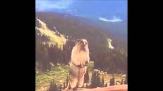 The Screaming Marmot (AFX mix)