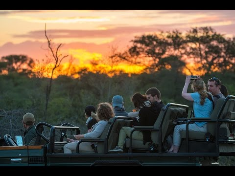 The Beauty of the African Bushveld