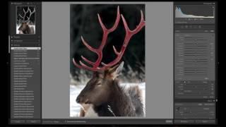 Elk Antler Edit REVEALED