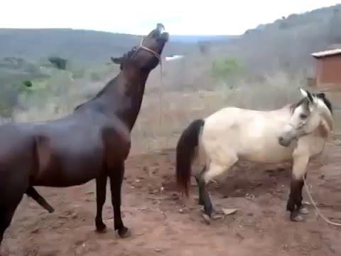 chịch nhau bà con ạ mấy con ngựa ấy =))