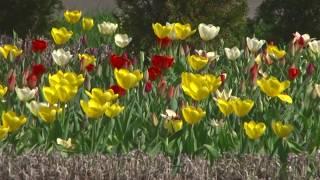 Благоустройство и озеленение. 21 апреля - общереспубликанский субботник