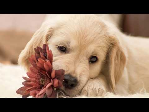 TOP CUTE DOG, PUPPIEST- Best Hd Wallpapers, Images, Whatsapp Video Status